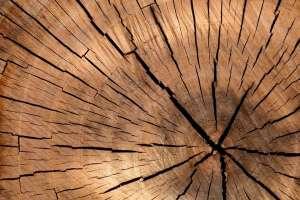 Wood to make fabrics